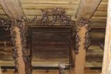Nietoperze rodzą się w tym kościele. Ich kolonia liczy ponad 600 sztuk!