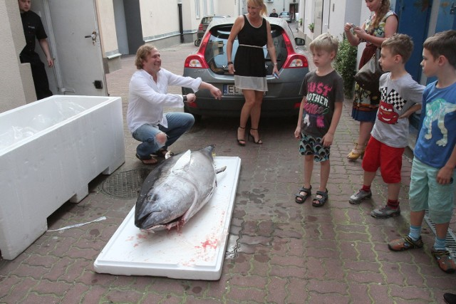 150-kilogramowy tuńczyk w Łodzi