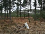 Kradli stroisz z lasu. Na widok strażnika porzucili dobytek