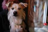 Dzień Kundelka w klubie Progresja. Wystawa czworonogów i spotkanie z psim behawiorystą [FOTORELACJA]