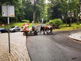 Kolejny upalny dzień, a konie nadal wożą turystów