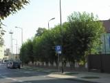 Koszmarki Żor: Wystające gałęzie z ogrodzenia szkoły. Kiedy znikną?