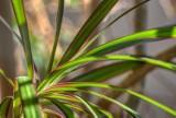 Skuteczne rośliny antysmogowe - warto je mieć w swoim domu! Te rośliny oczyszczą powietrze w twoim domu [28.10.2021]