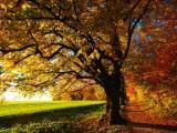 Pogoda w woj. lubelskim w sobotę, 26 października. Zobacz wideo
