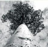 Śląskie ekologiczne: W skrócie
