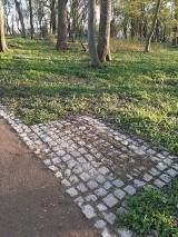 Gmina Pruszcz Gdański. Z parku w Wojanowie skradziono ławki. To nie jedyny akt wandalizmu!