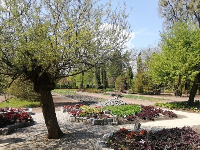 Miejski Ogród Botaniczny przygotowuje się do otwarcia, jednak obecnie odwiedzający mogą skorzystać tylko ze spaceru online Zobacz kolejne zdjęcia. Przesuwaj zdjęcia w prawo - naciśnij strzałkę lub przycisk NASTĘPNE