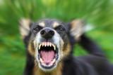 Uprzejmie donoszę, że Kowalski dręczy psa, czyli jak uprzykrzyć życie sąsiadowi