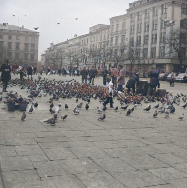 Karmienie gołębi na Rynku Głównym. W oddali zabytkowe kamienice.