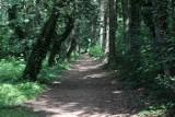 WSCHOWA. Największy wschowski park urzeka zielenią, różnorodnością drzew, śpiewem ptaków [ZDJĘCIA]