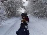 Atrakcje podczas ferii zimowych. Na półkoloniach w Mierzeszynie odbył się kulig  ZDJECIA