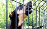 Zabór. Po ataku wandali, ludzie dobrego serca uratowali przytulisko dla zwierząt!