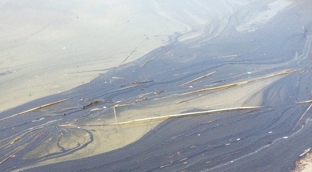Jezioro Lednica. Czy w akwenie pojawiło się zanieczyszczenie?