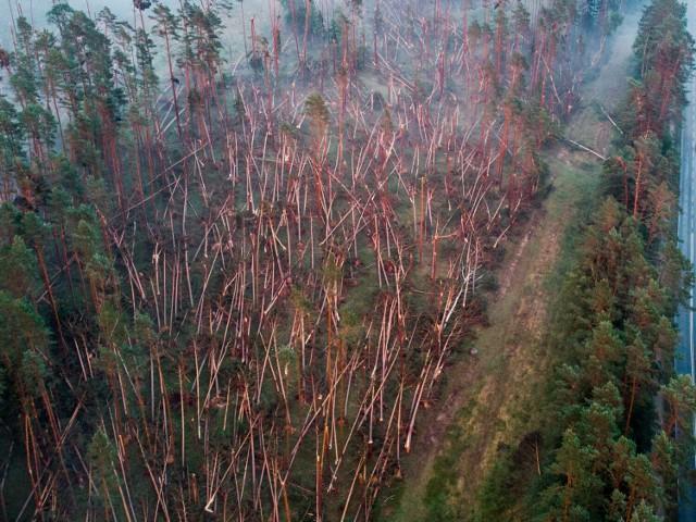 Silny wiatr zniszczył fragment lasu przy drodze z Osia do Tlenia