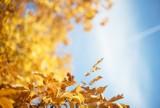 Pogoda w woj. lubelskim w środę, 23 października. Sprawdź prognozę