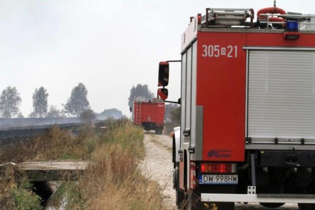 Strażacy w miniony weekend pomagali ludziom i zwierzętom