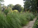Polecamy najpiękniejsze trawy ozdobne do dużego i małego ogrodu. Zobacz, jakie wybrać i jak je uprawiać