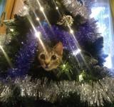 Tak psy i koty świętowały Boże Narodzenie w Dąbrowie Górniczej!