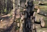 Tarnów. Wycinają drzewa w Lasku Lipie! Mieszkańcy w szoku na widok stert pni, nadleśnictwo tłumaczy się pielęgnacją [ZDJĘCIA]