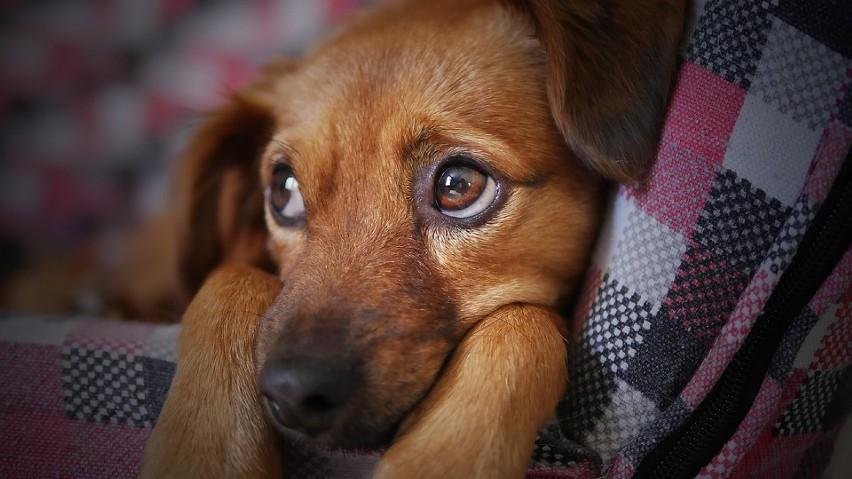 Wszystkie psy są na swój sposób piękne, ale tylko kundelki...