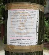 Katowice: Stuletnie lipy rosnące przy Kościuszki do wycinki? Mieszkańcy protestują