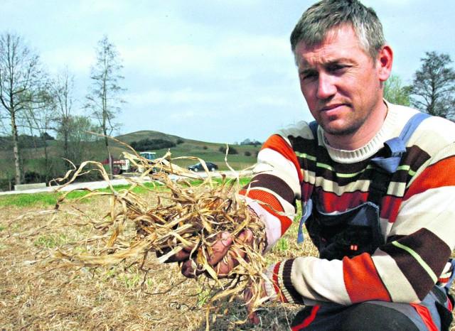 Zbigniew Kamiński z Kwielic (powiat Polkowicki) stracił 40 hektarów pszenicy