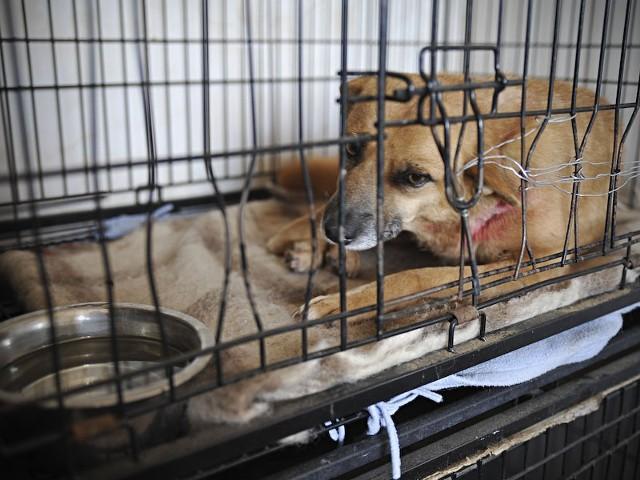 Psy ze schroniska w Wojtyszkach zabezpieczyła ptokuratura