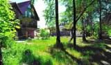 Łeba: Wytną las przy ul. Nadmorskiej, by zrobić drogę na wydmach?