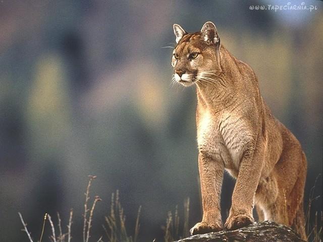 Podobno takie zwierzę widziane było w Bytomiu.