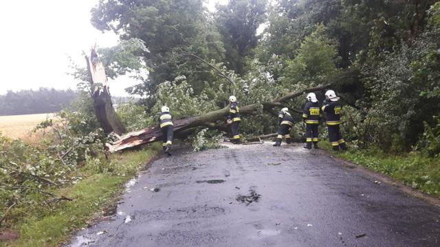 12 lipca 2021 r. strażacy z powiatu świeckiego wyjeżdżali głównie do powalonych przez wiatr drzew