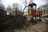 Wichura w Katowicach. Silny wiatr powyrywał drzewa na placu Wolności! [ZDJĘCIA]