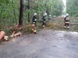 Burze oszczędziły Żory. Drobne interwencje strażaków. Udało się uniknąć poważnych strat