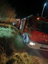 STRAŻACY W AKCJI: Pożar trawy w Zdunach w okolicach ul. Strzeleckiej [ZDJĘCIA]