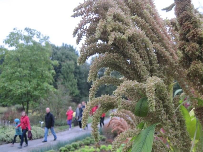 Impreza Rodzinna I Wystawa W Ogrodzie Botanicznym Umcs