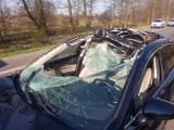 Wypadek w podwarszawskiej Wólce Radzymińskiej. Groźne zderzenie samochodu z łosiem. Kierowca w szpitalu