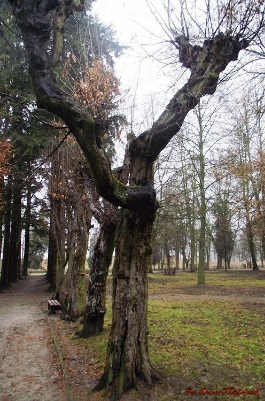Drzewo jest mocą, która powoli wznosi się ku niebu.(Antoine...