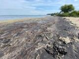 Strzeż się tych miejsc. Dzika plaża w Pucku przy ścieżce rowerowej. Na brzegu glony i smród nie z tej ziemi - pisze nasza Czytelniczka | FOT