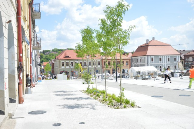 Nowa zieleń, posadzona w Bochni w ramach projektu rewitalizacji śródmieścia