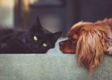 Darmowa sterylizacja i kastracja psów oraz kotów w gm. Kolbudy. Trwa nabór wniosków