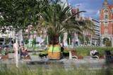Katowice: Palmy wkrótce wrócą na rynek. Jesień, zimę i początek wiosny spędziły w nasłonecznionej hali