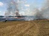 Strażacy walczyli z pożarem ścierniska w Kiączynie [ZDJĘCIA]
