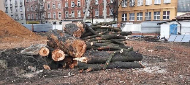 Nielegalna wycinka stuletnich drzew w Katowicach: internet wrze.  Zobacz kolejne zdjęcia. Przesuwaj zdjęcia w prawo - naciśnij strzałkę lub przycisk NASTĘPNE