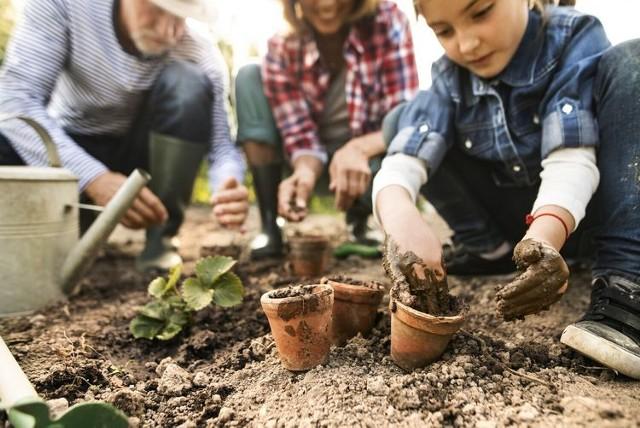 W bydgoskim Fordonie powstanie ogród społeczny