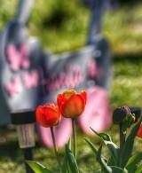 Najpiękniejsze kwiaty naszych Czytelników z rejonu Żar i Żagania. Zachwycają barwami i kształtami