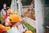 Osada leśna w Kole gościła młodych tomaszowian i pokazała urocze zwierzaki [ZDJĘCIA]