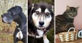 Psy i koty za darmo na OLX. Oto oferty z powiatu bytowskiego