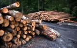 Lasy koło Oleśnicy przeznaczone do wycinki. Powstała szczegółowa mapa (ZDJĘCIA)