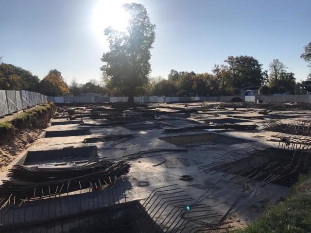 Lipa będzie upiększała okolicę galerii handlowej w Gubinie.