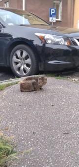 Tarnów. Co stało się z kotem? Tarnowianka oburzona działalnością azylu dla zwierząt. Żąda kontroli instytucji