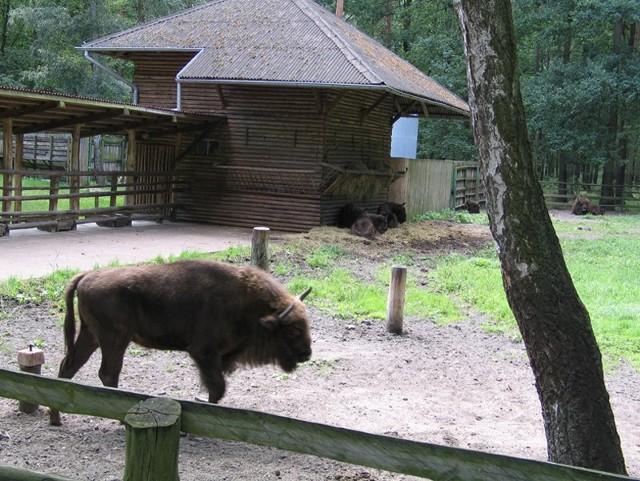 Pieczeń z tych zwierząt poleca restauracja Muzealna w Gołuchowie